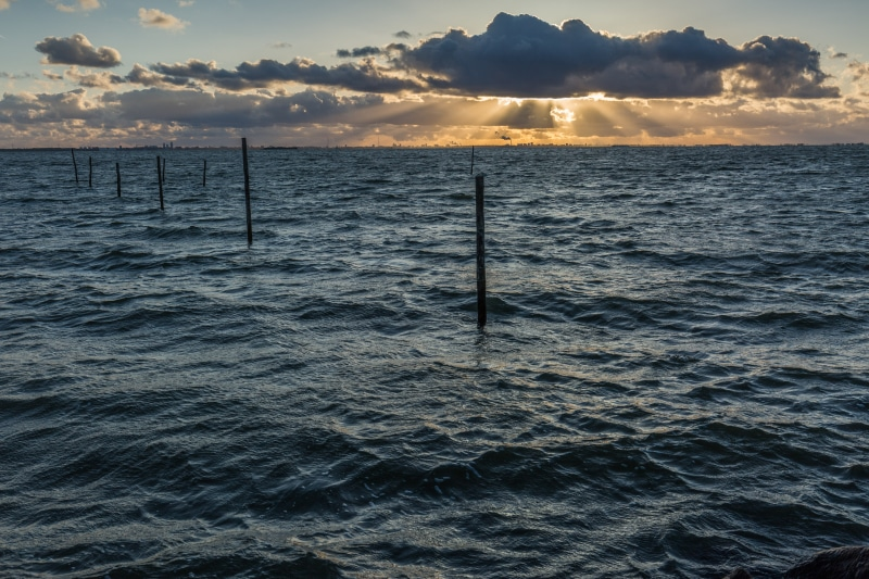 Oostvaardersdijk